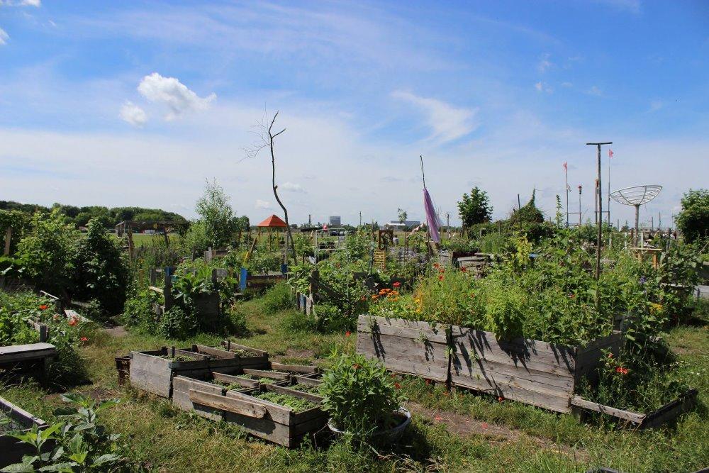 urban gardens in berlin tempelhof europa aqu. Black Bedroom Furniture Sets. Home Design Ideas